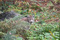 nationalpark_bayerischer_wald